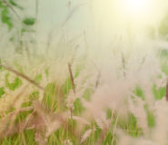 Abstrakt bakgrund av den mjuka och suddiga grässlätten, tonat varmt för tappning Arkivfoto