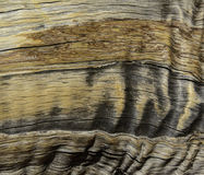 Bakgrund för abstrakt begrepp för Treeskällkorn Arkivbild