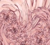 Abstrakt bakgrund av enviolett kryddnejlika Blom- bakgrund med rosa blommor av nejlikor Royaltyfri Bild