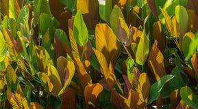 Abstrakt bakgrund av färggräsplan och brunt för blad två Fotografering för Bildbyråer