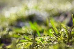 Abstrakt grönt gräs Arkivbilder