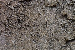 Abstrakt bakgrund av grungebusen texturerade stenväggen Fotografering för Bildbyråer