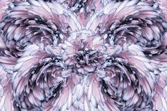 Abstrakt bakgrund av kronblad av enblått kryddnejlika blommar vektor för detaljerad teckning för bakgrund blom- Royaltyfria Foton