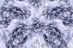 Abstrakt bakgrund av kronblad av engrå färger kryddnejlika blommar vektor för detaljerad teckning för bakgrund blom- Fotografering för Bildbyråer