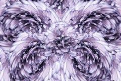 Abstrakt bakgrund av kronblad av enrosa färger kryddnejlika blommar vektor för detaljerad teckning för bakgrund blom- Royaltyfri Fotografi