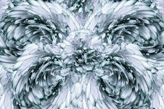 Abstrakt bakgrund av kronblad av enturkos kryddnejlika blommar vektor för detaljerad teckning för bakgrund blom- Royaltyfria Foton