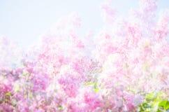 Abstrakt bakgrund av lila blommor Fotografering för Bildbyråer