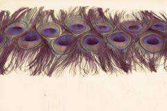 Abstrakt bakgrund av ljusa påfågelfjädrar Royaltyfri Foto