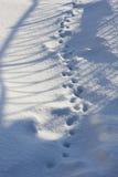 Abstrakt bakgrund av ny snö 30168 Royaltyfri Foto