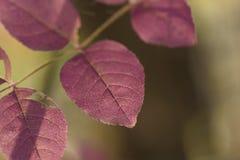 Abstrakt bakgrund av purpurfärgade sidor Arkivbilder