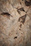 Abstrakt bakgrund av sandsten vaggar med spår Royaltyfria Bilder