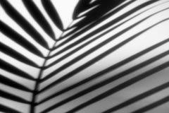 Abstrakt bakgrund av skuggapalmblad på en vit vägg Royaltyfria Foton