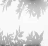 Abstrakt bakgrund av skuggor spricker ut på en vit vägg Fotografering för Bildbyråer