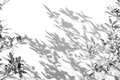 Abstrakt bakgrund av skuggor spricker ut på en vit vägg Royaltyfri Fotografi