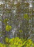 Abstrakt bakgrund av stenväggen med den trädlemmar och laven Arkivbilder