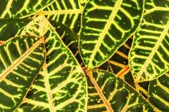 Abstrakt bakgrund av stora tropiska sidor som lokaliseras kaotiskt Arkivfoton