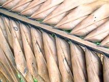 Abstrakt bakgrund av torkade kokosnötsidor Arkivbild
