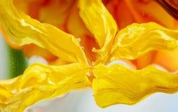Abstrakt bakgrund av torkade kronblad av tulpan Fotografering för Bildbyråer