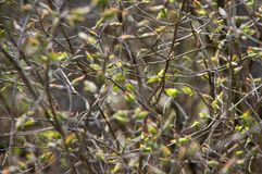 Abstrakt bakgrund av vegetation Fotografering för Bildbyråer