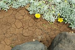Abstrakt bakgrund av vulkanisk jordning och den succelent växten Fotografering för Bildbyråer