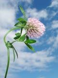 Abstrakt bakgrund - blomma för Ñ-vän med daggdroppar - makro Royaltyfri Foto