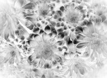 Abstrakt bakgrund eller textur för vit blomma Royaltyfria Foton