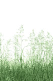 Abstrakt bakgrund för änggräs, stort detaljerat isolerat för Closeupkopia för makro vertikalt utrymme Arkivbild