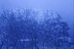 Abstrakt bakgrund för afton Royaltyfri Fotografi
