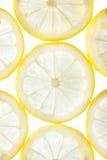 Abstrakt bakgrund för citrusa skivor Arkivfoton