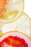 Abstrakt bakgrund för citrusa skivor Arkivbilder