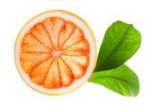 Abstrakt bakgrund för citrusa skivor Royaltyfri Fotografi
