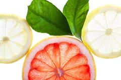 Abstrakt bakgrund för citrusa skivor Royaltyfri Foto