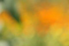 Abstrakt bakgrund för hösten/för nedgången - gör suddig materielfoto Royaltyfria Bilder