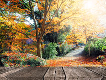 Abstrakt bakgrund för höstskogsuddighet Royaltyfria Bilder