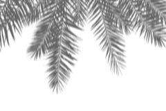 Abstrakt bakgrund för sommar av exotiska palmblad för skugga på en vit vägg Vitt och svart för samkopiering ett foto eller en mod fotografering för bildbyråer