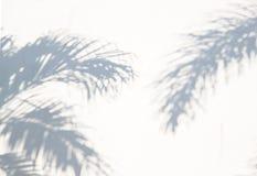 Abstrakt bakgrund för sommar av exotiska palmblad för skugga på en vit vägg arkivfoto