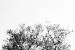 Abstrakt bakgrund för trädfilialer Arkivfoto