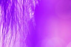 Abstrakt bakgrund för ultraviolet av en makrofjäder med droppar av dagg eller vatten En härlig konstbild Trendig färg Arkivfoton