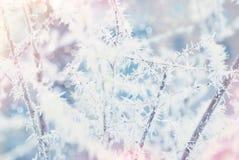Abstrakt bakgrund för vinter - Frosty Snowy Arkivfoto