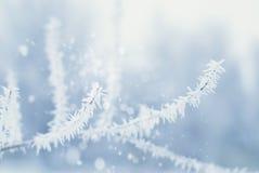 Abstrakt bakgrund för vinter - Frosty Snowy Royaltyfri Fotografi