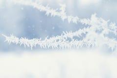 Abstrakt bakgrund för vinter - Frosty Snowy Fotografering för Bildbyråer