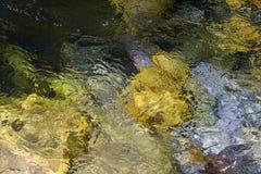 Abstrakt bakgrund: flödande vatten i en flod på en ljus solig dag, bubblor och ilsken blick på yttersidan av vatten, mångfärgad b Arkivbild