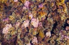 Abstrakt bakgrund - flerfärgad växt- havsväxt på stranden Royaltyfri Fotografi