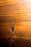 Abstrakt bakgrund från ett gammalt träbräde Arkivfoton