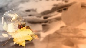 Abstrakt bakgrund från lönnlöv royaltyfria foton