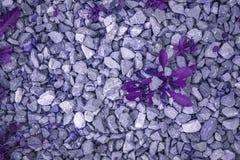 Abstrakt bakgrund gräset på stenarna som målas i ultraviolett färg Royaltyfria Bilder