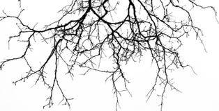 abstrakt bakgrund halloween Svart filial av trädet på en vit b Royaltyfria Bilder
