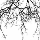 abstrakt bakgrund halloween Svart filial av trädet på en vit b Royaltyfri Foto