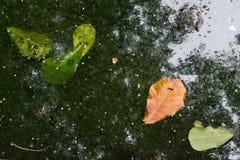 Abstrakt bakgrund: mörker - grön lövverk av träd reflekterade i vatten, grå färgland, gröna sidor på vattenyttersidan och ett sto Arkivbilder