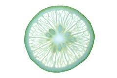 Abstrakt bakgrund med citrusfrukt av limefruktskivan Royaltyfria Bilder